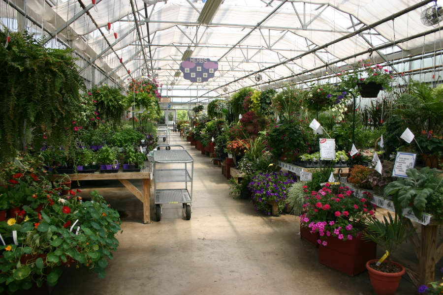 down-aisle-in-other-greenhouse_4_1
