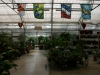 center-of-greenhouse_3_1